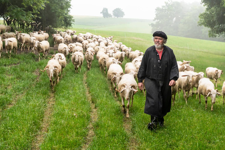 Langenburger Schafskäserei