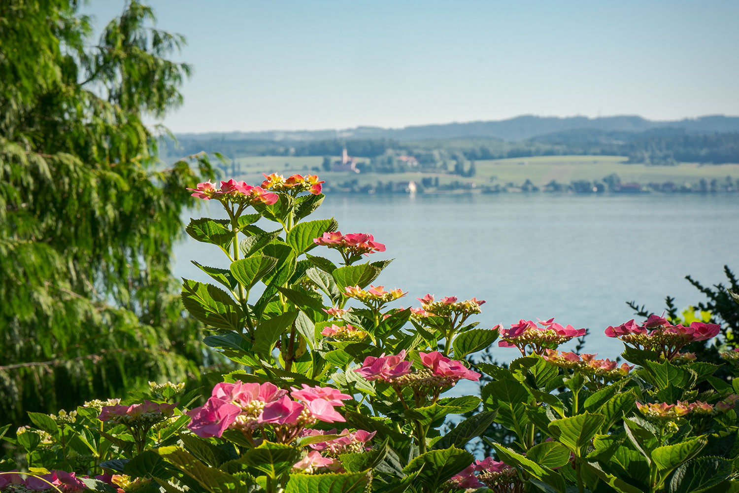 Blumeninsel Mainau am Bodensee