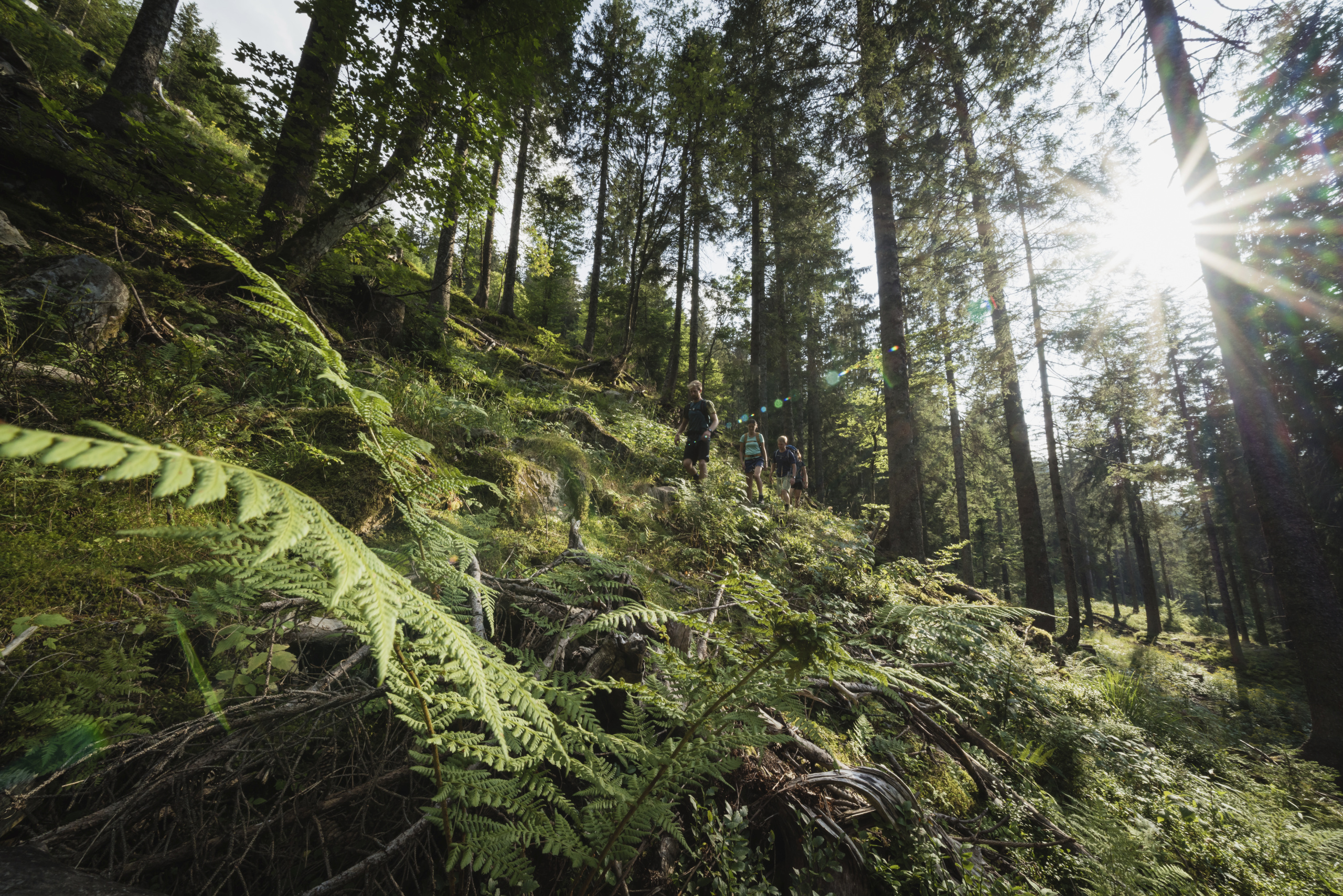 Mountain Climate Trails in the Black Forest Highlands