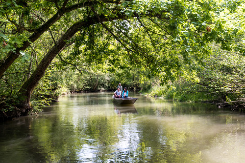Punting trip in the Taubergießen nature conservation area