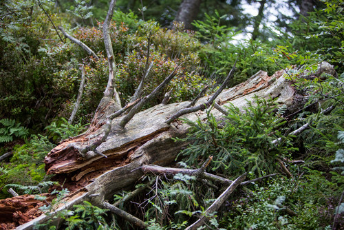 Black Forest National Park(c)qu-int-GmbH.jpg