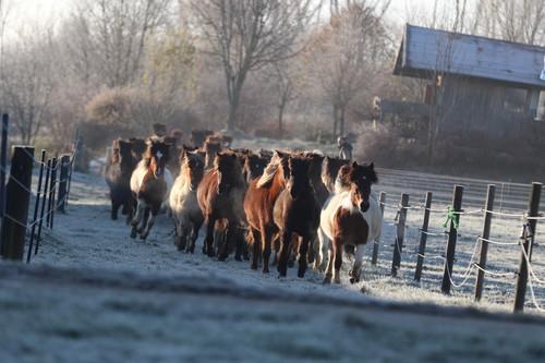 Log Cabins Hohenstein winter