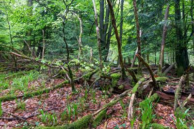 Nationalpark Schwarzwald_Baum