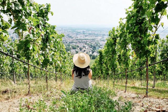 Heilbronn_Weinberge und Blick auf die Stadt